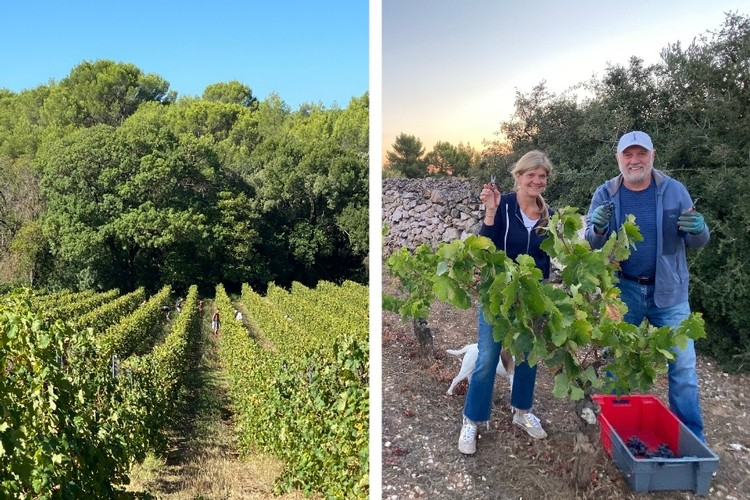 Friends and family members join a crew from Spain who've been hand-harvesting for Borie la Vitarele harvest for years.